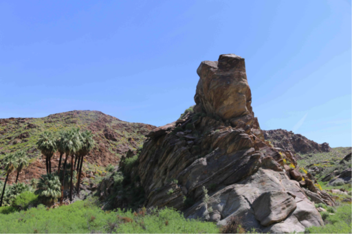 Conical outcropping of sedimentary rock next to grove of palm trees in desert landscape covered in green vegetation