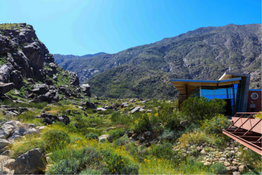 Modern visitor center with mirrored windows and angular roof overhang nestled in a rocky desert landscape with yellow wildflowers
