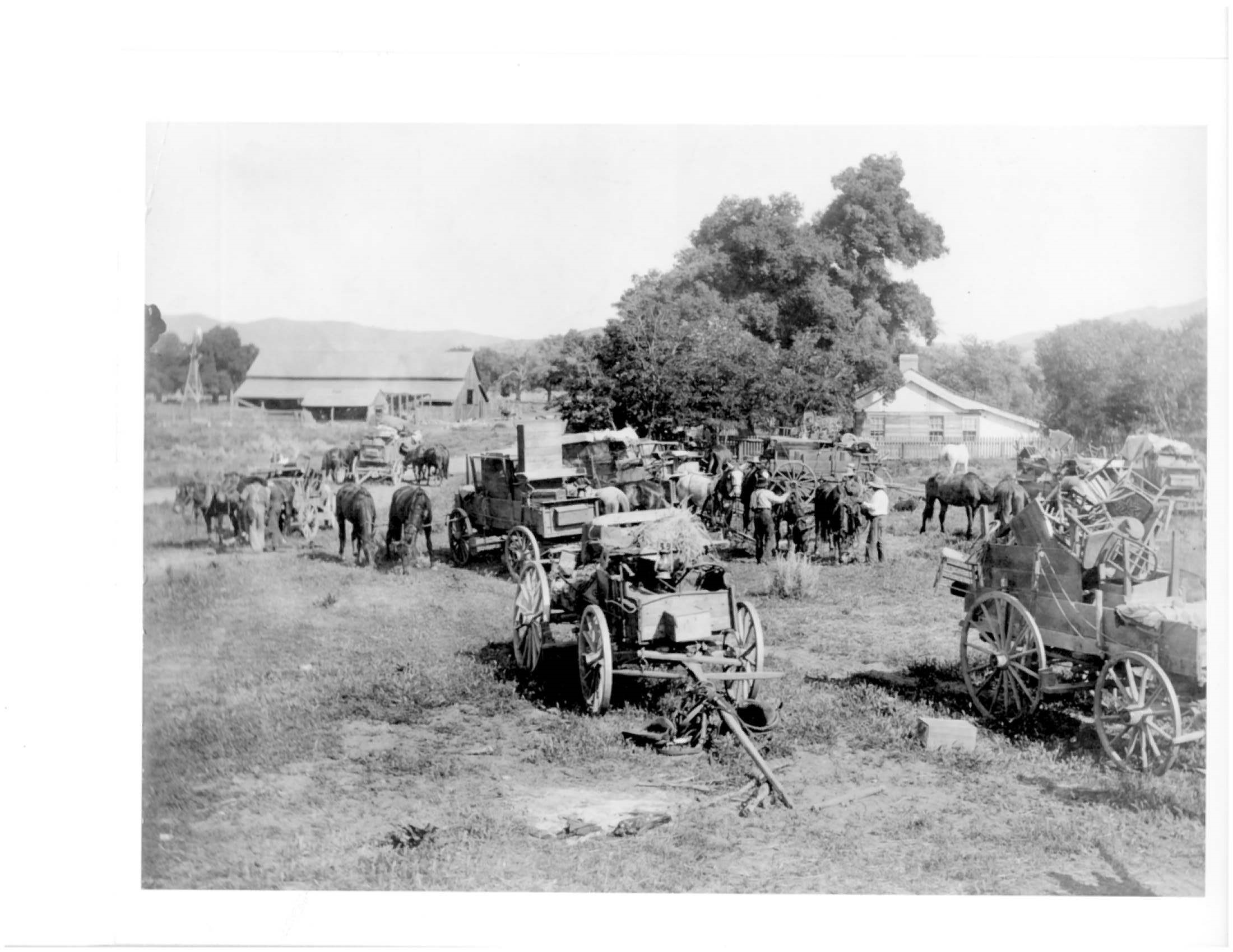 Old photograph of a line of horse- or mule-drawn wagons with shade tree, barn and farmhouse in background